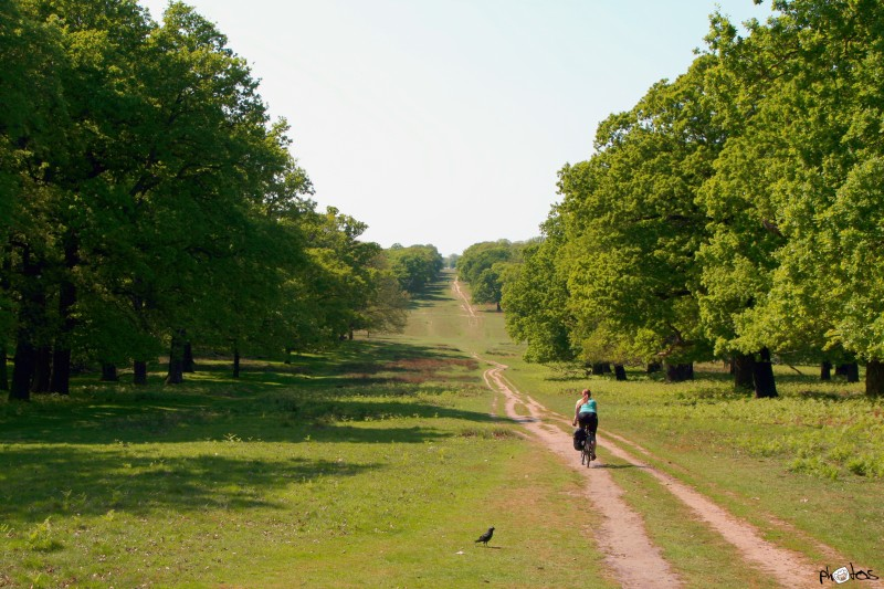 pootle richmond park