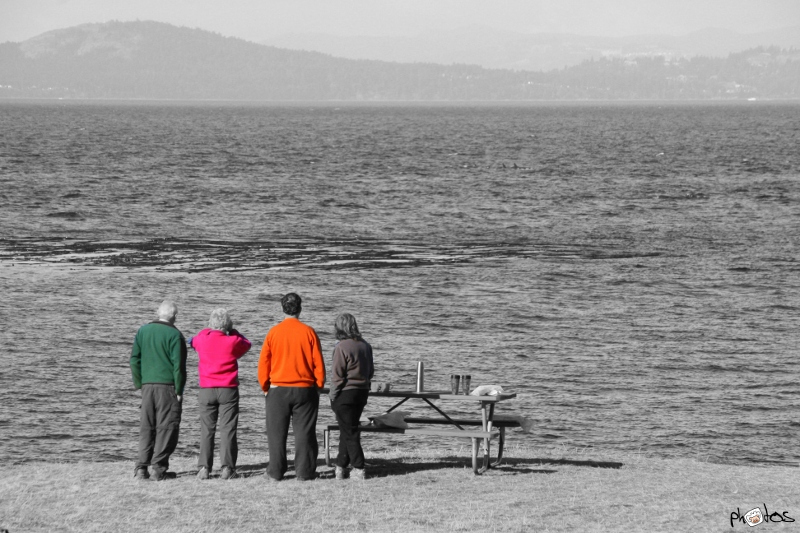 Whale watchers San Juan island