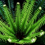 fern funnel