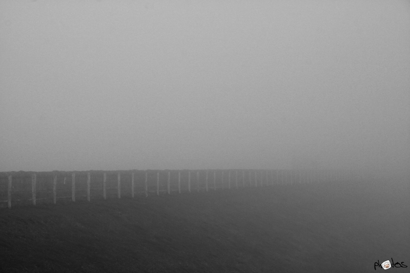 fence in fog