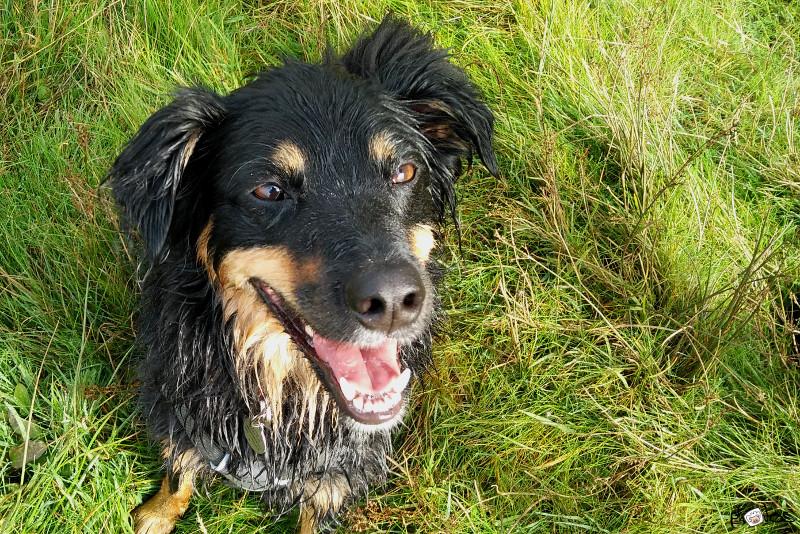 wet and happy dog