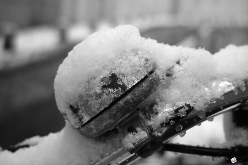 snowbell