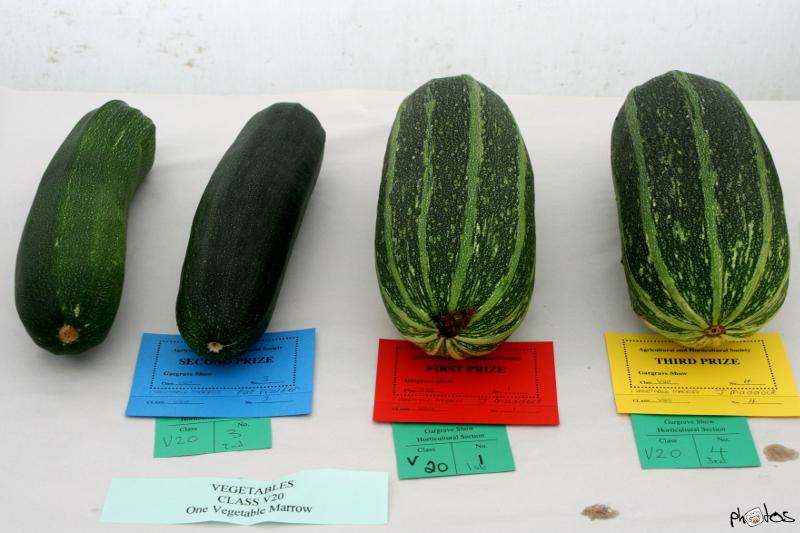 veggie class v20