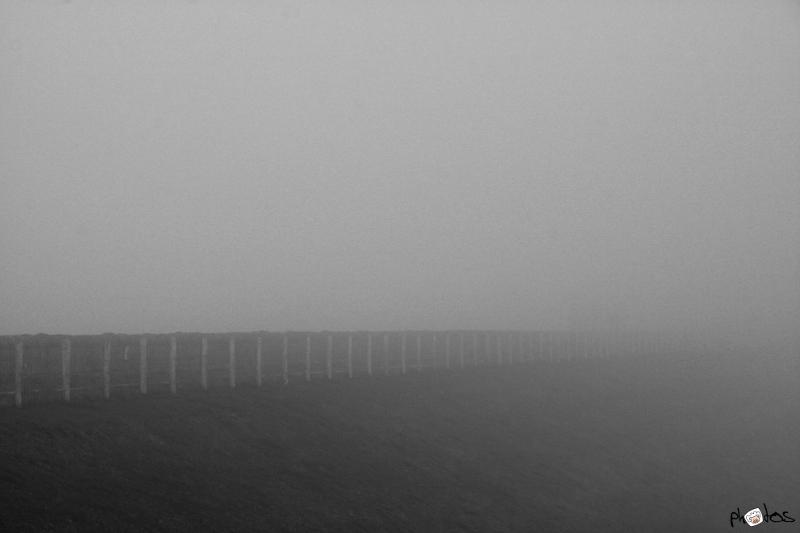 fence in fog