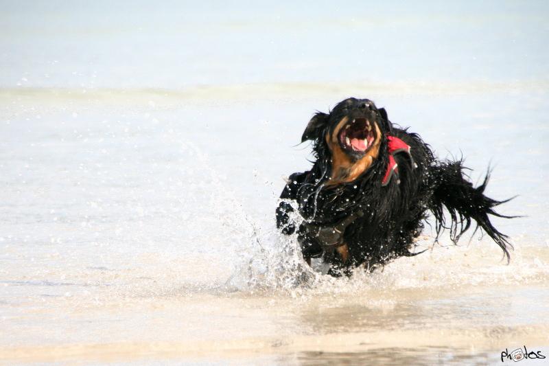 vand hund